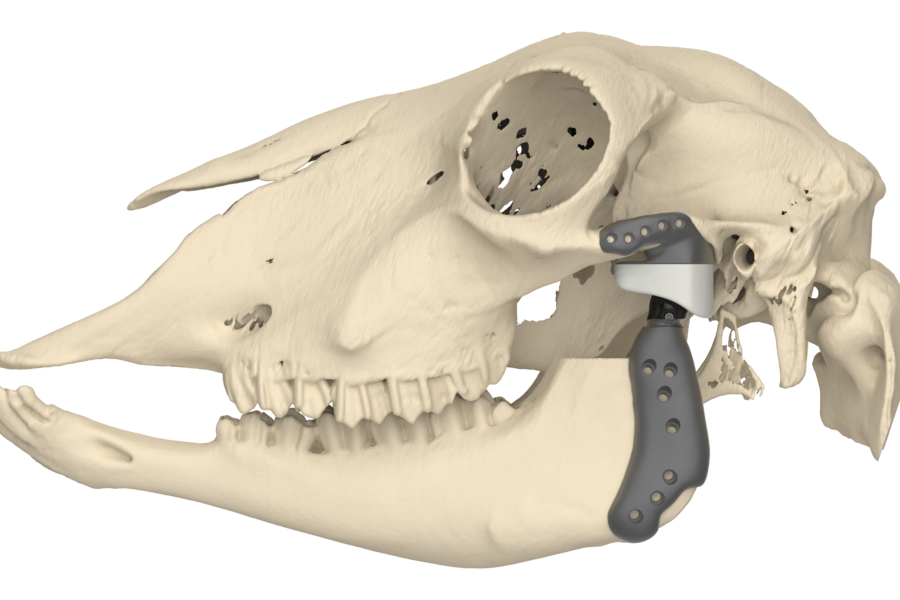 Preliminary kinematic result of a sheep specific 3D printed TMJ prosthesis